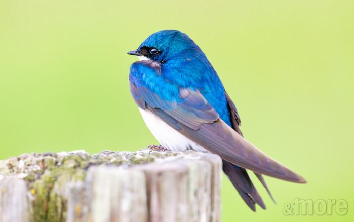 Bird_Sparrow_H.jpg