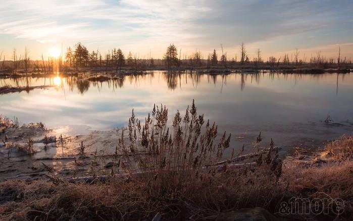 Landscape_WileySlough_H.jpg