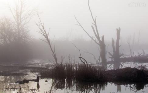 Landscapes_WileySlough_H.jpg