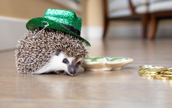 Pets_Hedgehog2_H.jpg