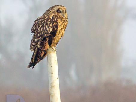 &1 More Photo: Owls