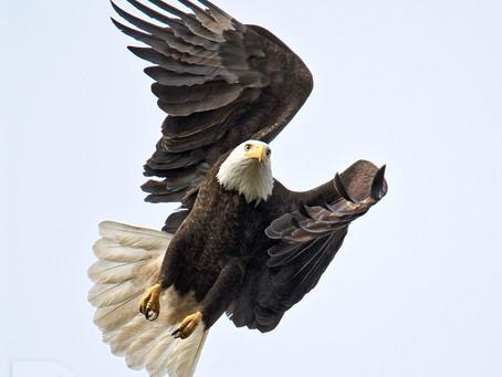 &1 More Photo: Birds Near Home