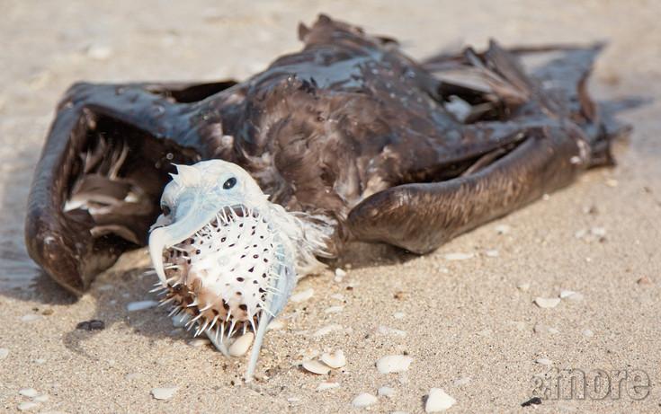Bird_DeadFrigit_H.jpg