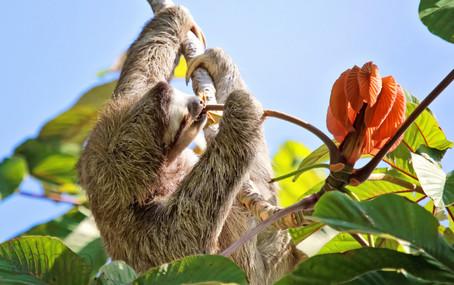 Wildlife_EatingSloth_H.jpg