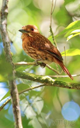 Bird_CostaRica_V.jpg