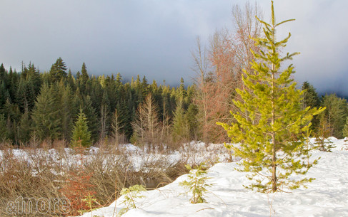 Landscape_Cascades_H.jpg
