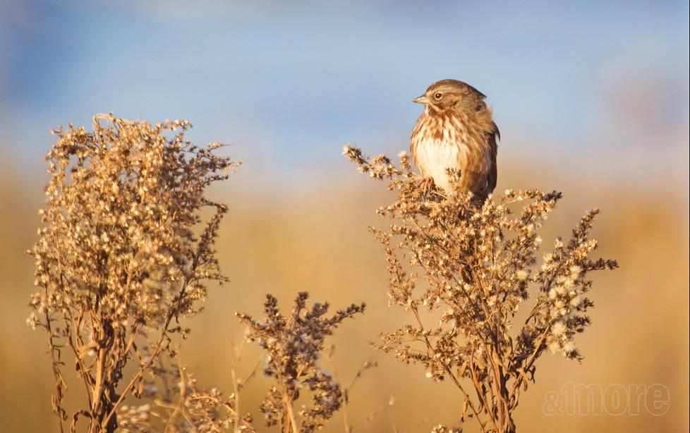 Bird_WileySloughBird_H.jpg