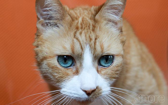 Curious Orange Cat