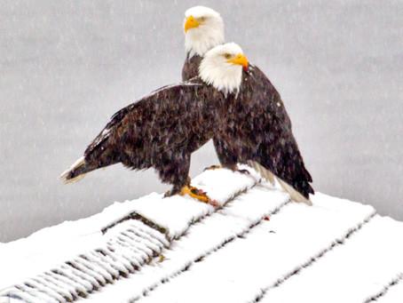 &1 More Photo: Birds