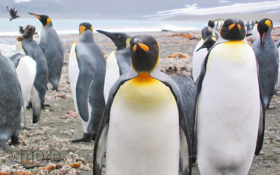 Bird_Penguins_H.jpg