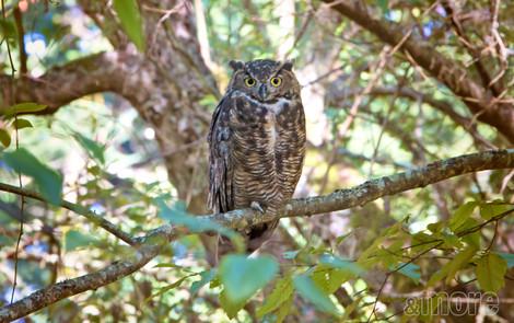 Bird_Owl_H.jpg