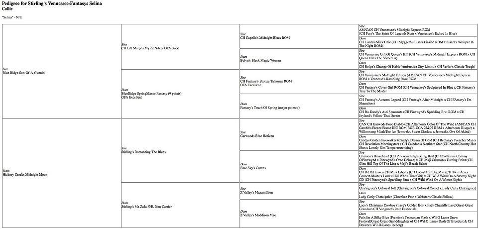 Stirlingcollies - Selina pedigree