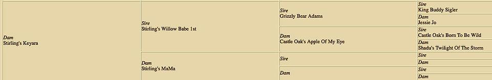 Stirlingcollies-Keyara pedigree - Teddy's Dam