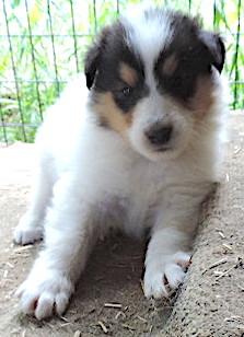 2-White, w/Tri Mkgs Female