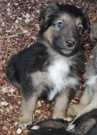 3-Black/Tan Male
