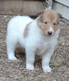 4-White, w/Sable Mkgs Female