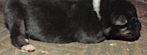 6-Tri Female