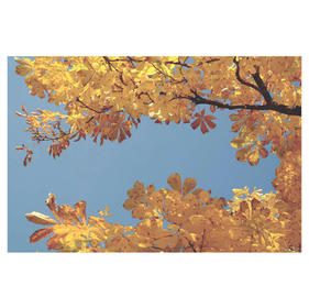 chestnut_leaves_autumn_fall_color_leaves
