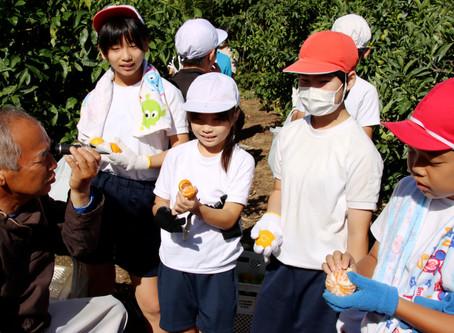 甘くて美味しいよ 御浜小5年生ミカンの収穫を体験