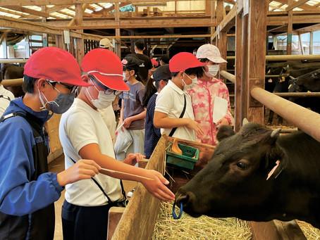 頂いてるのは命 有馬小5年生 黒毛和牛の岡田牧場を見学