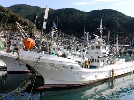 未だ近海で見当たらず 水揚げゼロ続くサンマ漁