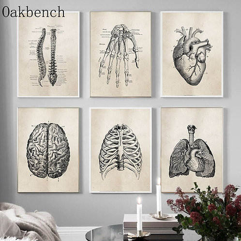 Human Anatomy Science Vintage Print Painting Canvas Posters Wall Pictures
