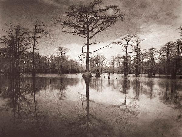 Swamptree.jpg