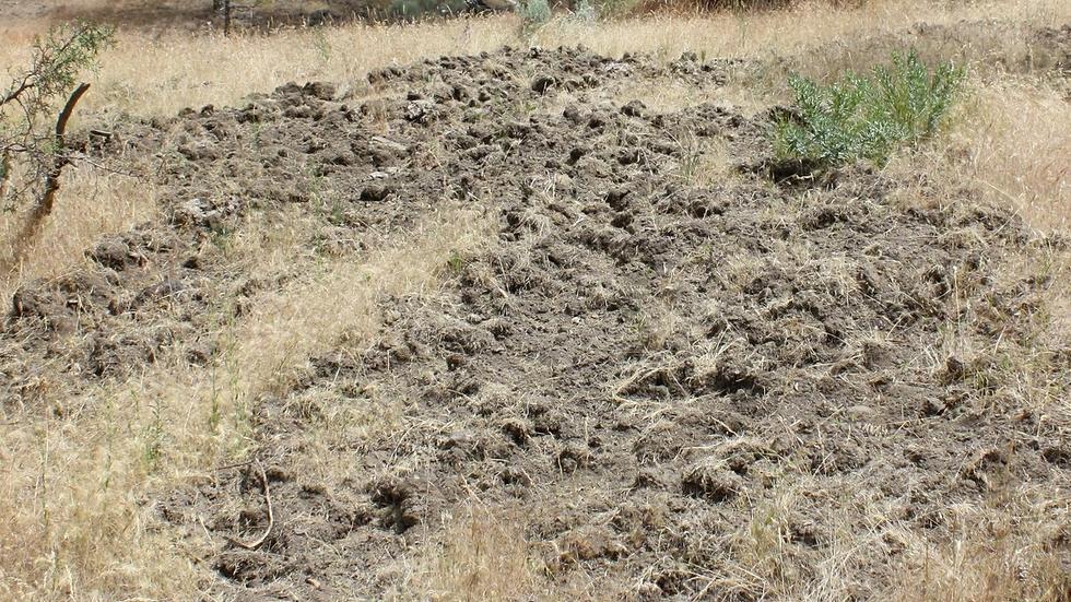 Advanced Wildlife Tracks & Sign Online Course (CEU)