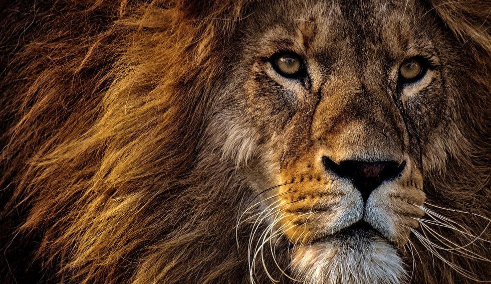 Löwenherz Lebensberatung & Coaching; Löwe; Stärke; Mut