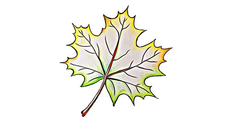 Herbst Grundkurs: Lösungsorientierte Arbeit