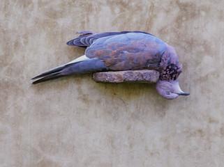 Lorena Guillen-Vaschetti (Argentina), Dead Bird, 2016