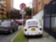 white-beetle-.jpg