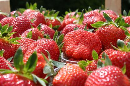 fraises de la ferme de la solive