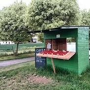 vente des fraises ferme de la solive moxhe