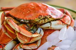 Crab-3218