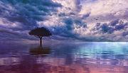 tree-3725908_1280.jpg