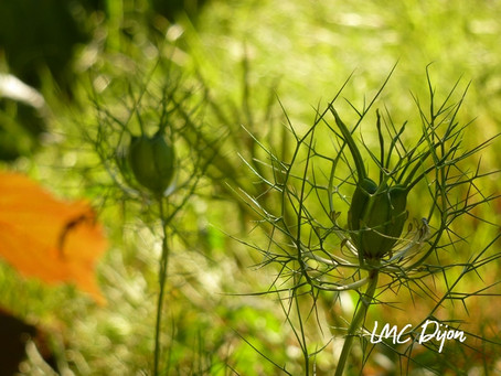 Ranuculaceae et Berberidaceae