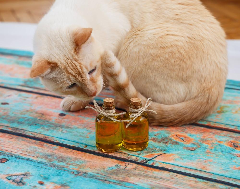 El aceite de oliva es una fuente natural de salud y bienestar para los animales domésticos