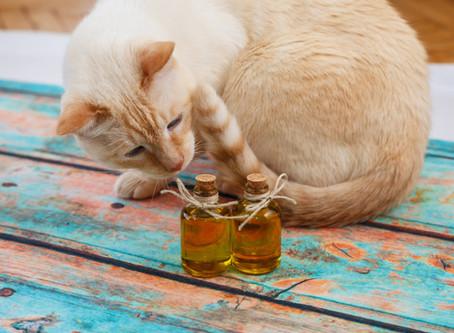 Cómo ayuda del aceite de oliva a mi gato