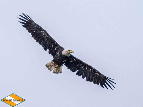 Freedom Flying