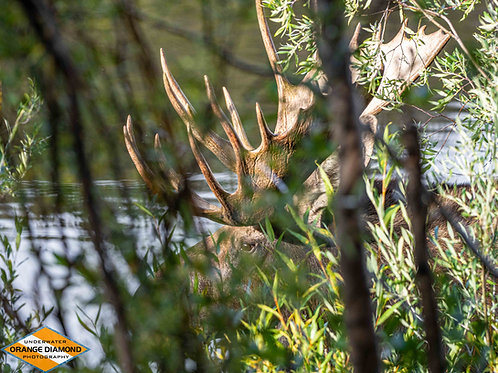Through the Willows