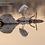 Thumbnail: Snowy Egret Reflections