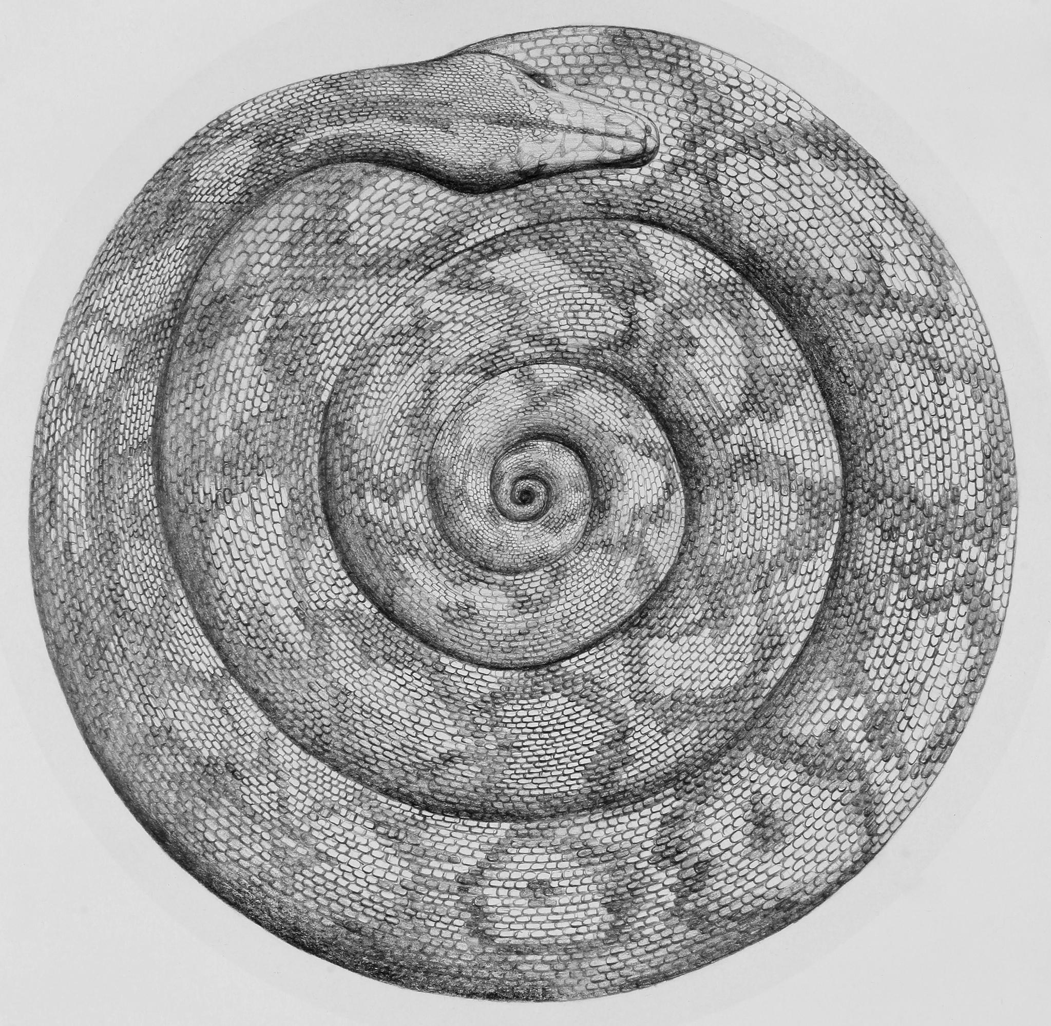 Mandala (drawing)