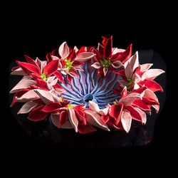 Pink and Red Flower Anemone