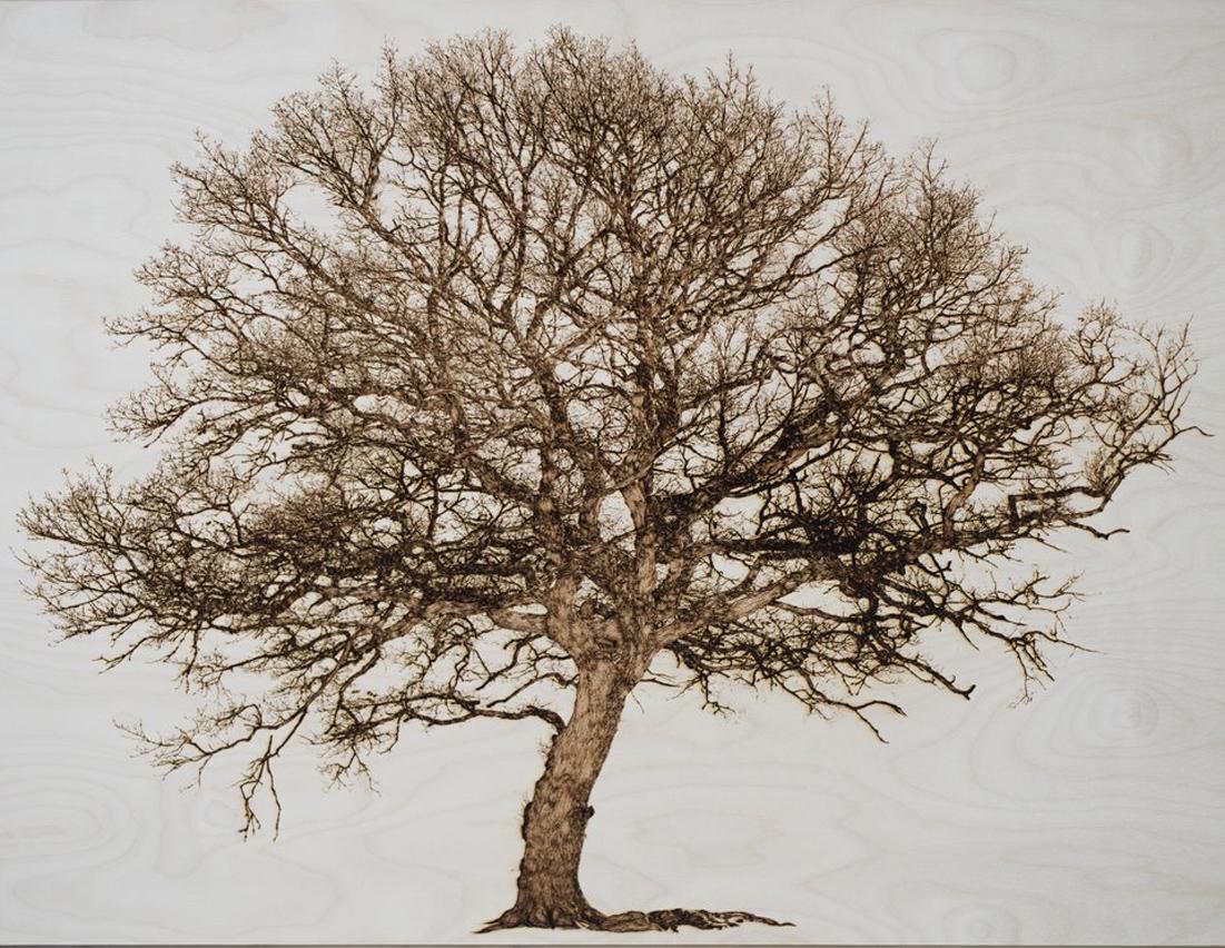 Oak in Cwmbach
