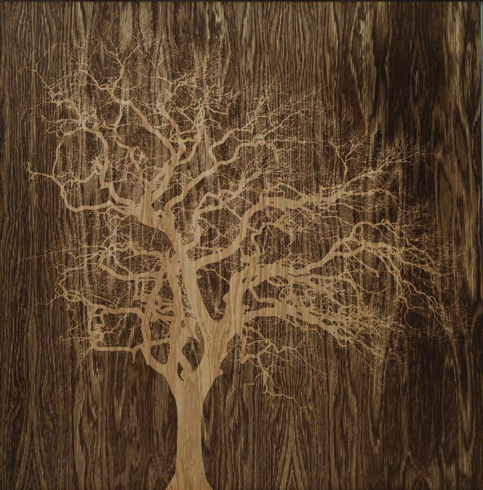 Oak in Ledbury
