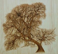 Weeping Willow in Coombes Moor