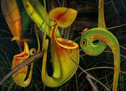 Nepenthes bicalcarata - Dr Chris Thorogood