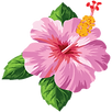 flor-tropical-opiniones.png