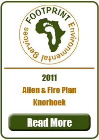 Alien & Fire Plan, Knorhoek